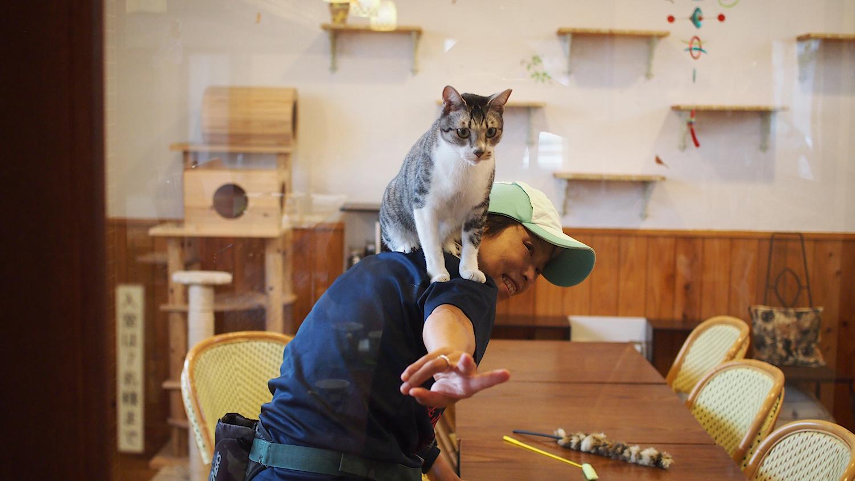 フレンドリーな猫にお客さんも幸せいっぱいな様子