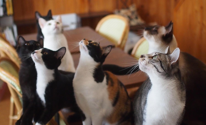 5匹の猫(+里親募集中の研修生)たち勢揃い!
