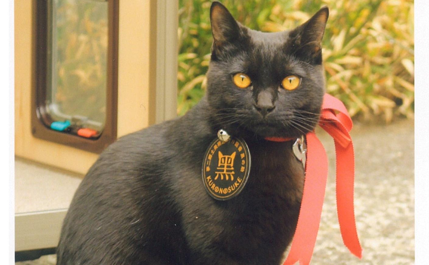 【岡山】竹久夢二の描く黒猫が美術館にやってきた!