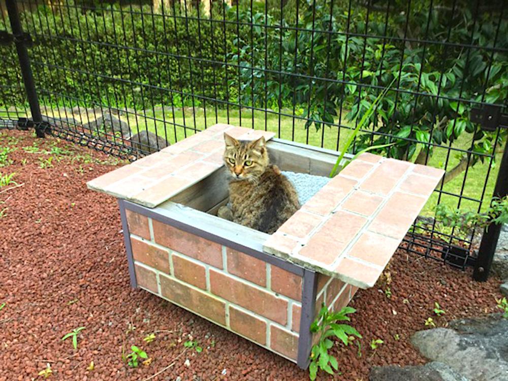 専用猫ボックスでくつろぐクロちゃん