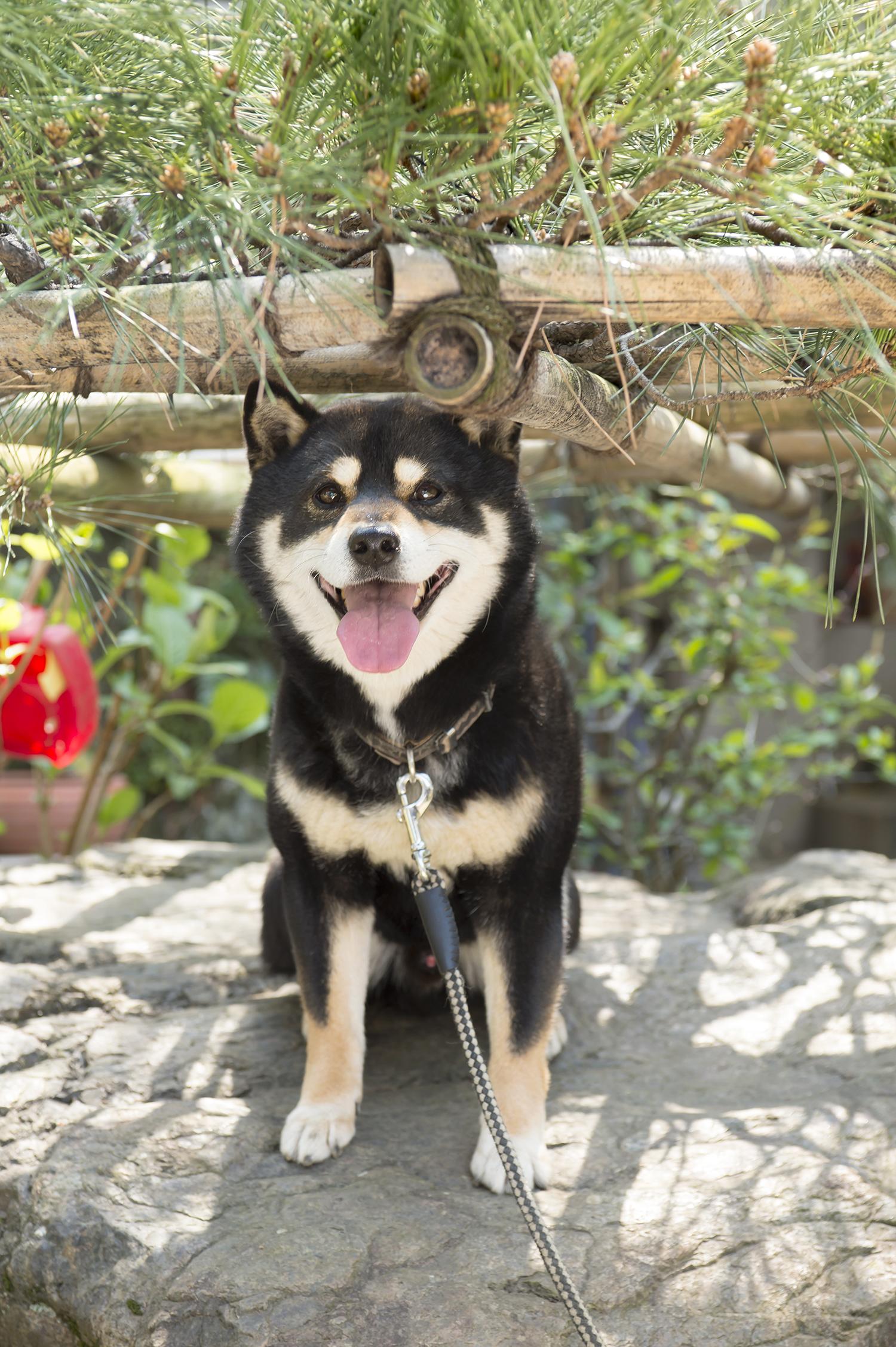 この技術を継いだ若き四代目・廣瀬雄一さんと、愛犬コモンに会いに来た。