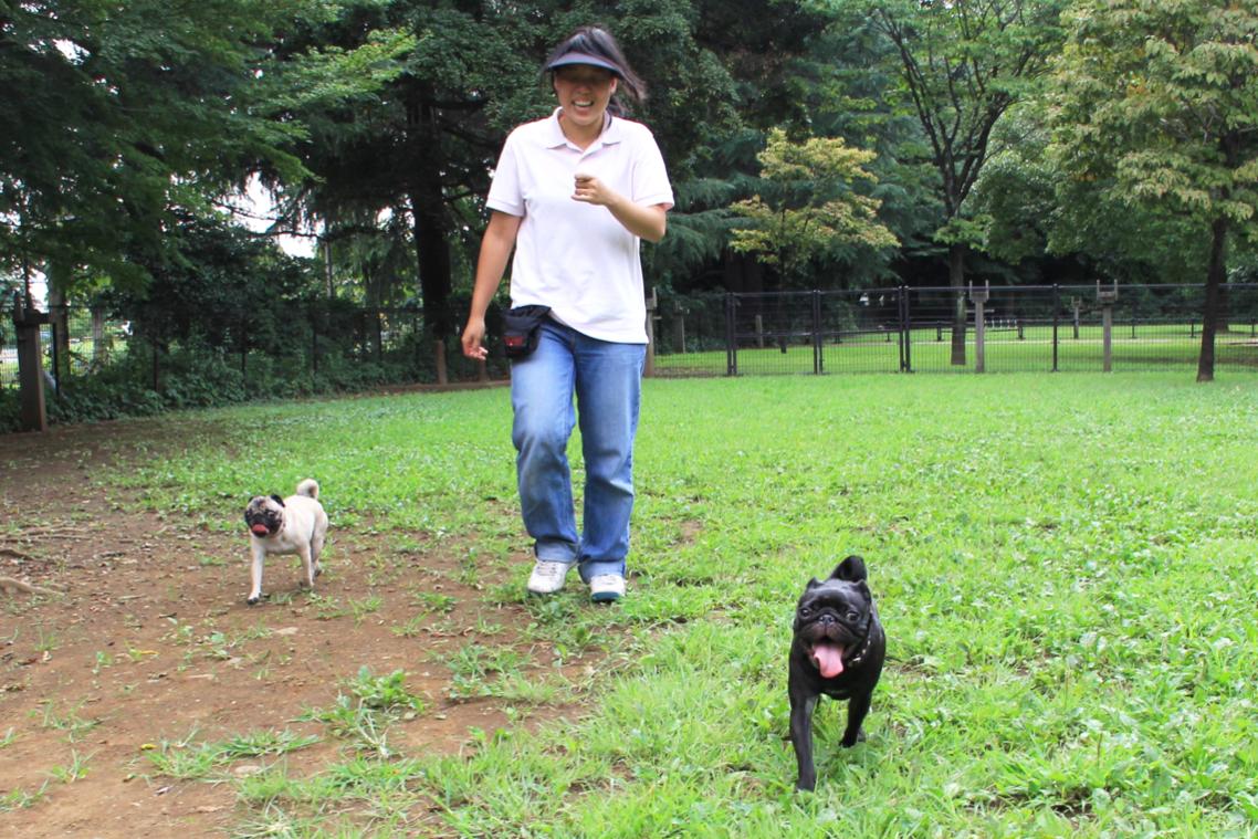 【花梅トライ! トライ!!】犬の社交場「ドッグラン」。思いっきり遊ぶためのマナーやルールとは?