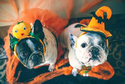 NYハロウィンパレードに学ぶ、今年のハロウィンを愛犬と一緒にお手軽&思いっきり楽しむ方法!