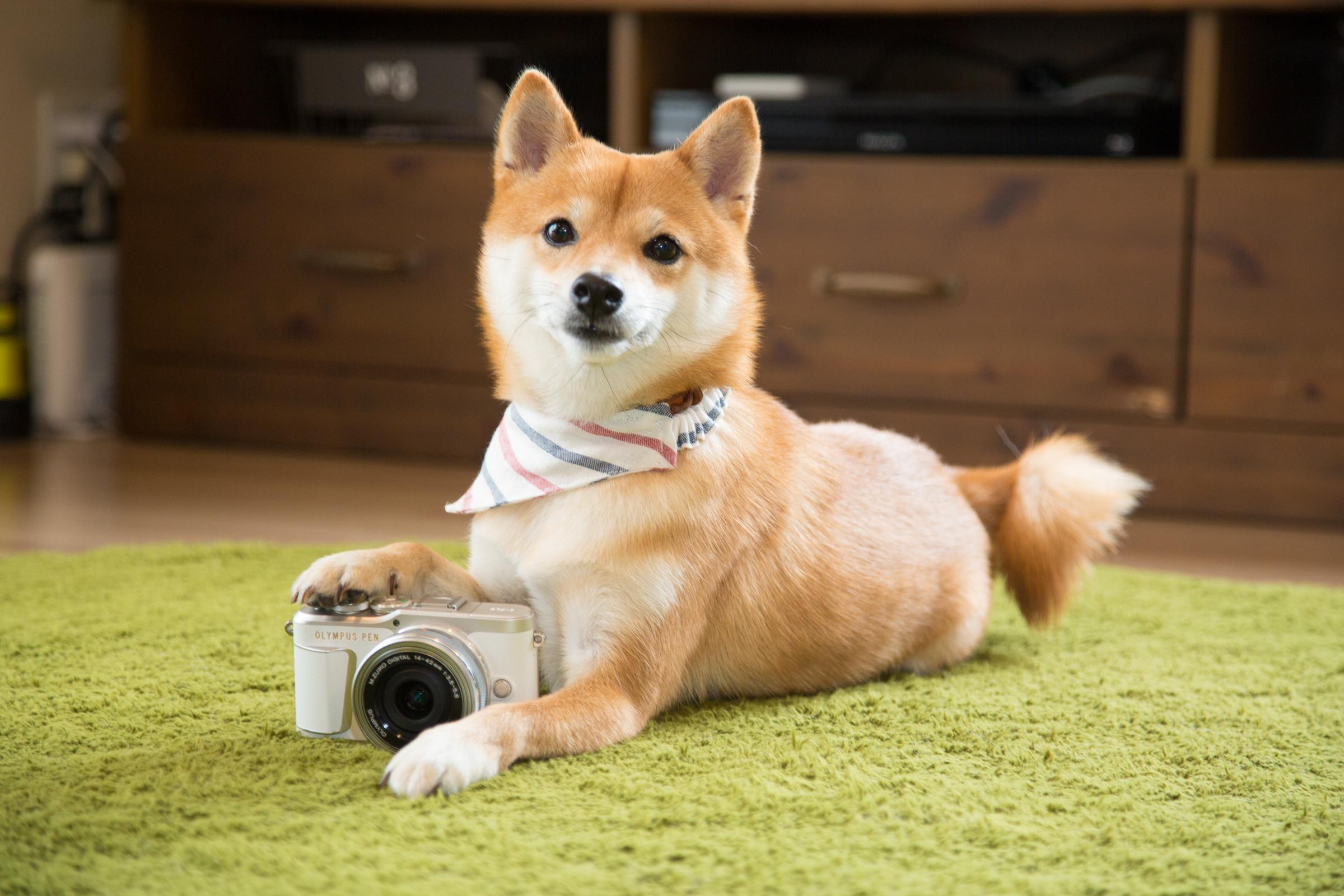 愛犬のとっておきの一瞬を、もっとかわいく、もっときれいに!