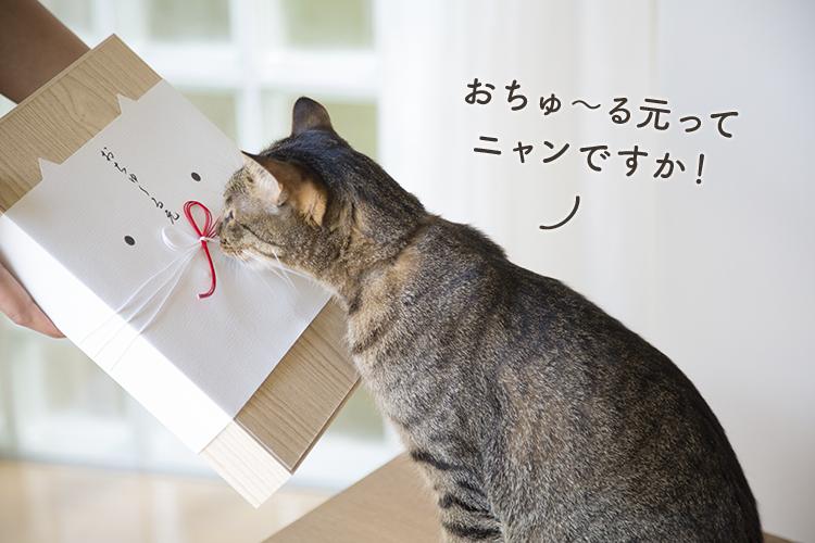新しい文化の誕生!猫ちゃんも大喜びの『おちゅ~る元』って?