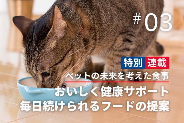 「これまで通り」の食事で大丈夫?ネコちゃんの避妊・去勢後は要注意!