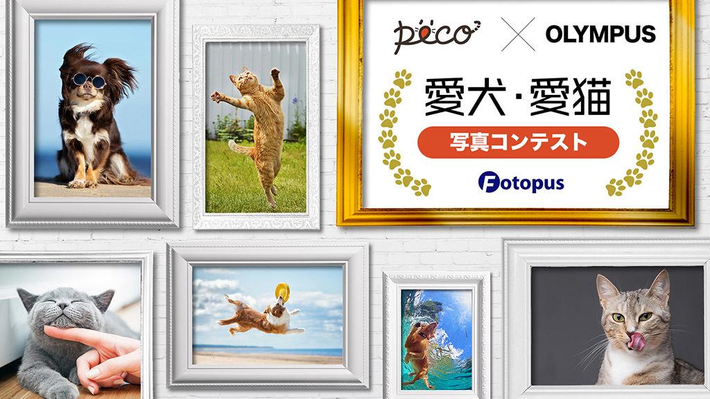 【PECO✕OLYMPUS】Fotopusで開催決定!「愛犬・愛猫 写真コンテスト」