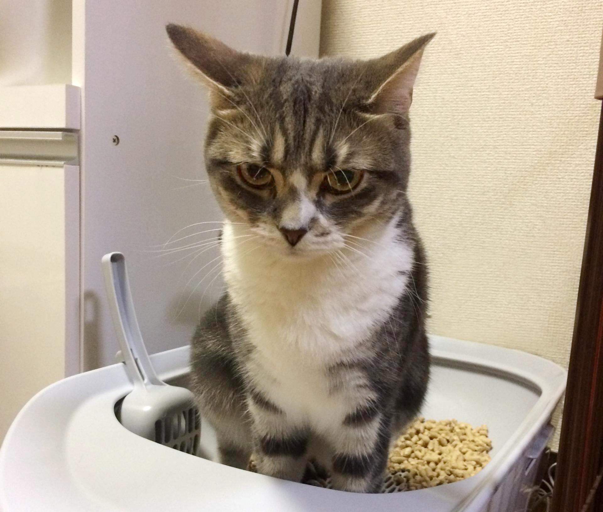 【答えることができますか】愛猫の尿の回数や量を | PECO(ペコ)