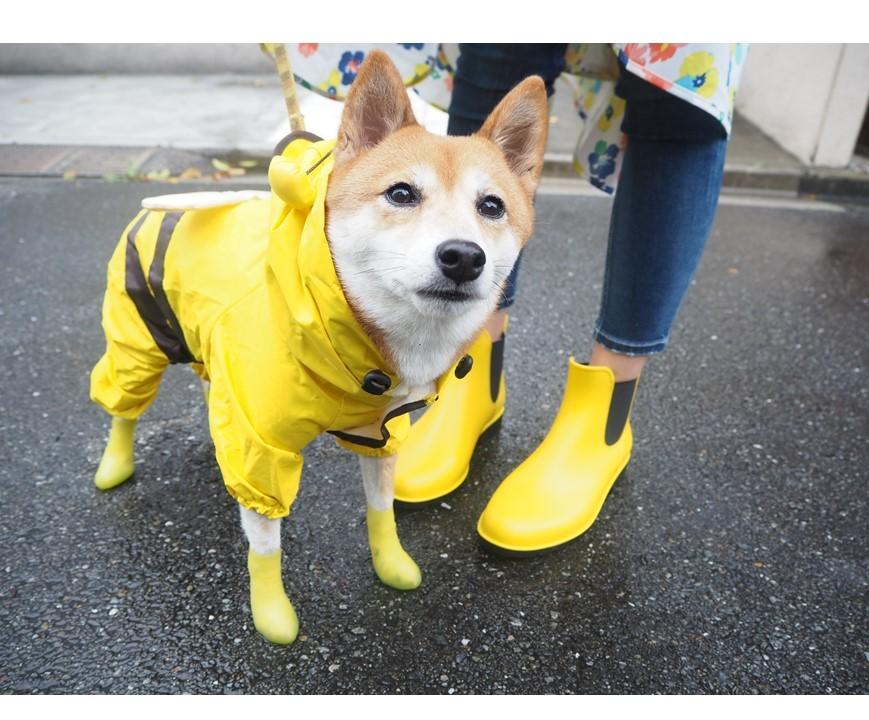 柴犬かりんが教えちゃう!雨の日のお散歩こそ、オシャレを楽しむ!