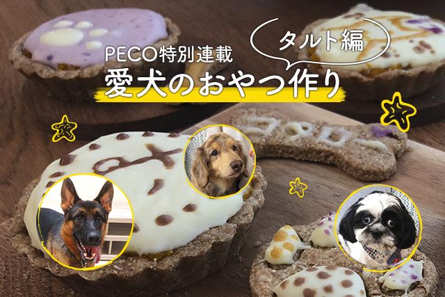 【愛犬のおやつ作り】パンプキンタルトを作ってみよう!