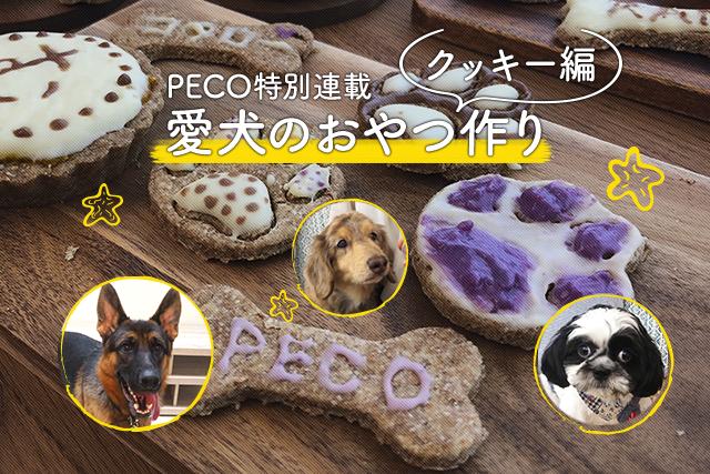 【愛犬のおやつ作り】アイシングクッキーを作ってみよう!