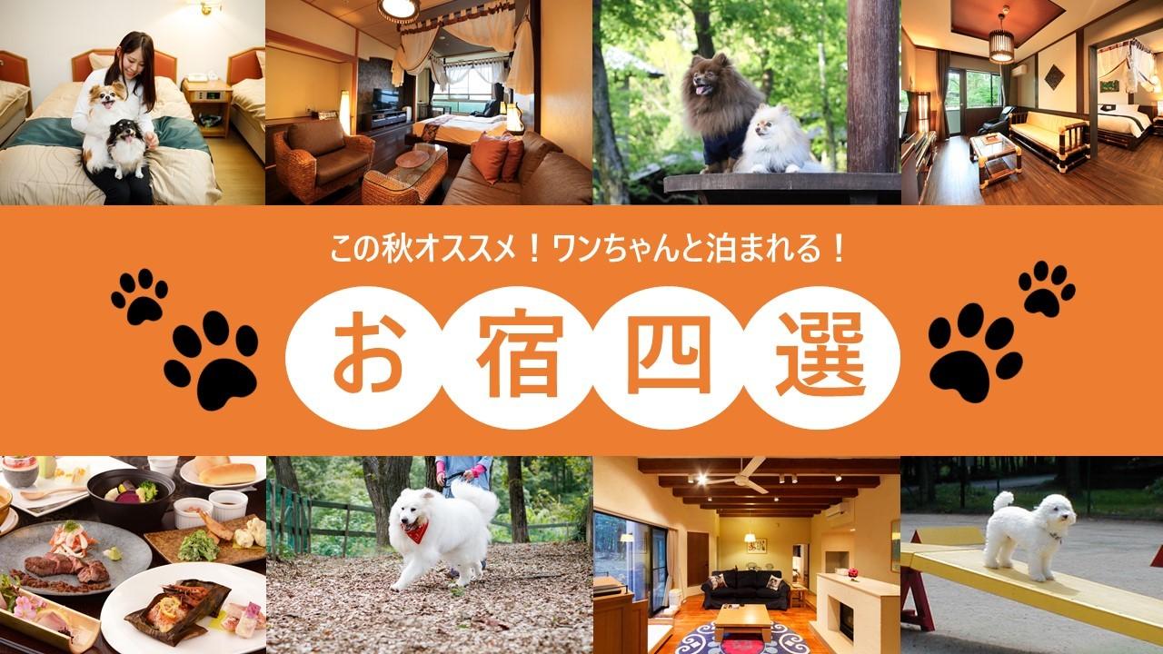 【特別な体験】愛犬と泊まれる温泉リゾート特集!