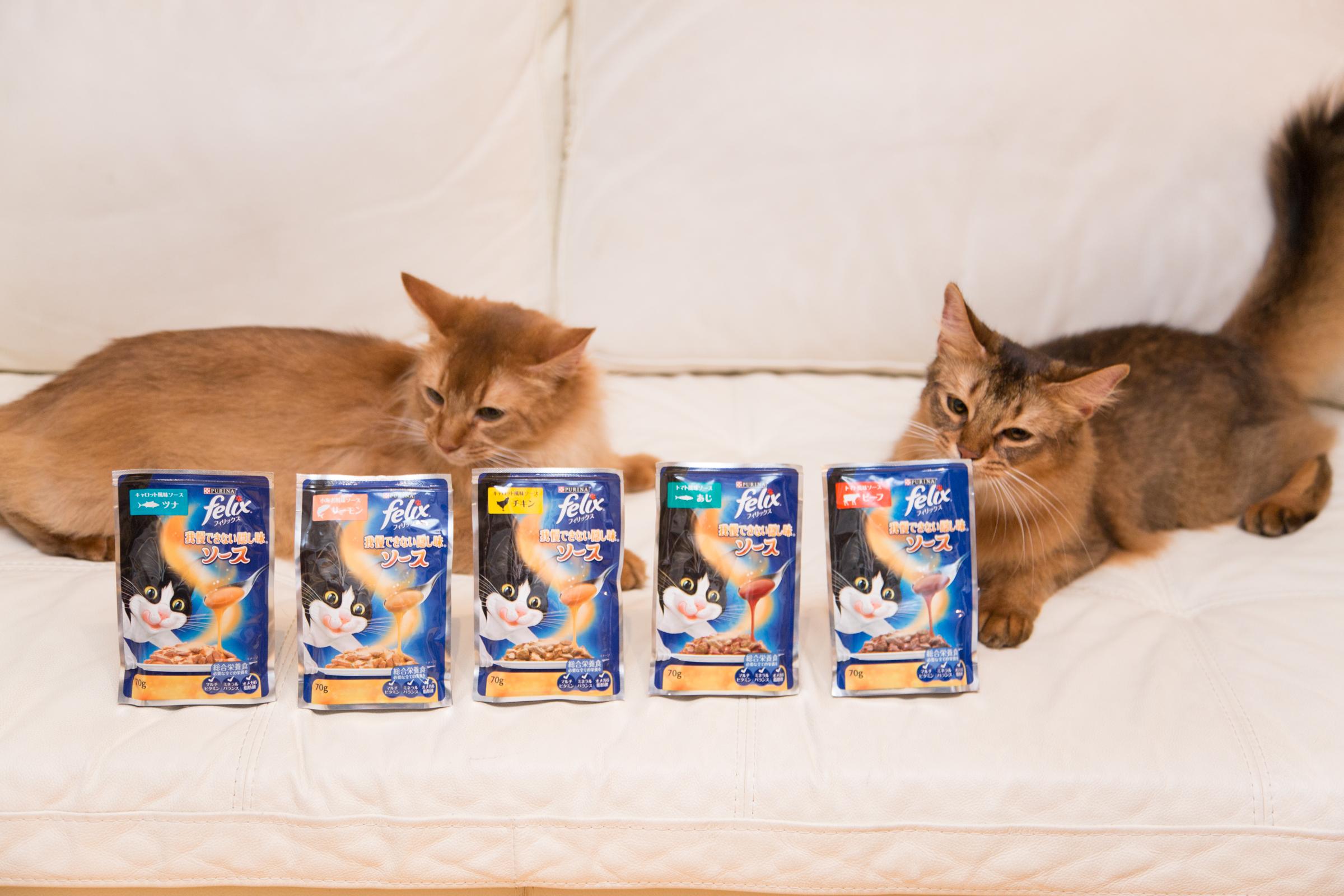 """ネコさんたちが悩む""""食""""のあれこれ…『フィリックス』の新商品で丸ごと解決!"""