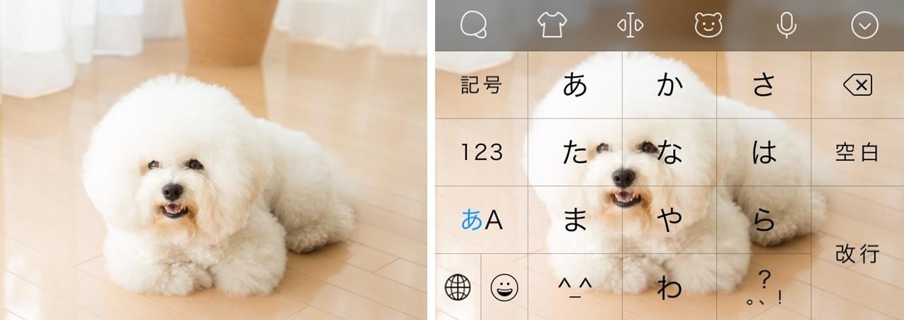 かわいいフワモコ写真がこんな感じのキーボードに変身!