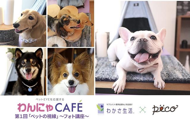 【わんにゃCAFE】ペットフォトグラファーが教える犬猫をかわいく♡撮るコツとは?