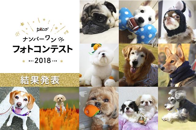 『ナンバーワンフォトコンテスト2018』結果発表!