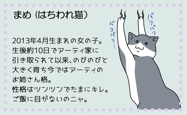 まめ(はちわれ猫)