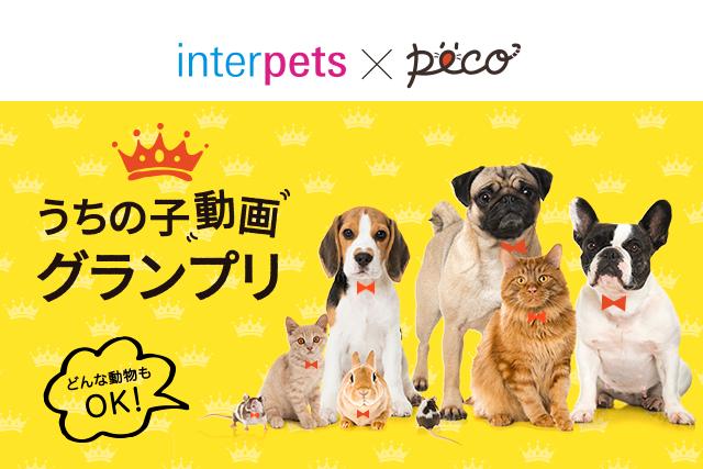 『インターペット×PECO うちの子動画グランプリ』最終ノミネート動画発表!!
