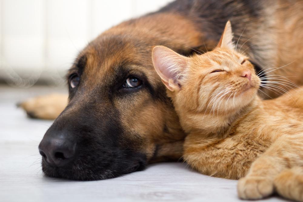 改めて学ぼう「狂犬病」は身近な感染症?犬や人以外には関係ないこと?
