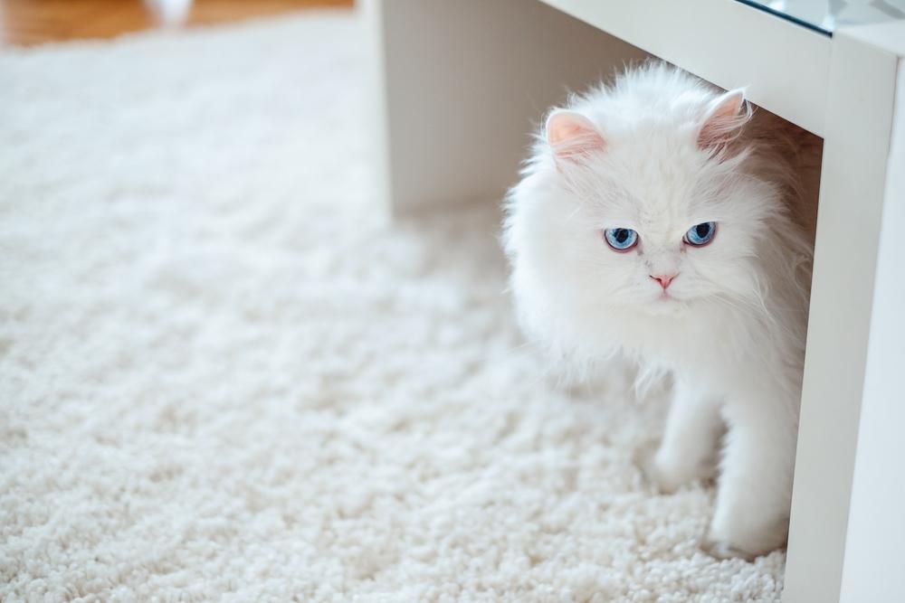 お部屋の環境は愛猫にとって最適ですか?猫の習性にあった部屋作りを考えよう