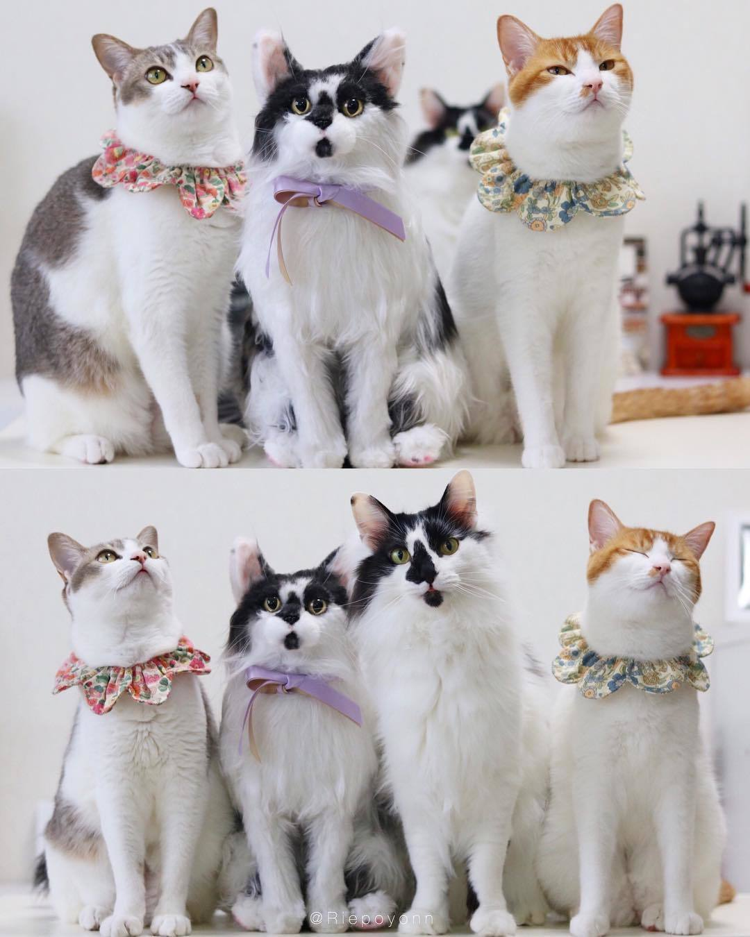 ネコ 猫 オリジナル オーダーメイド ぬいぐるみ