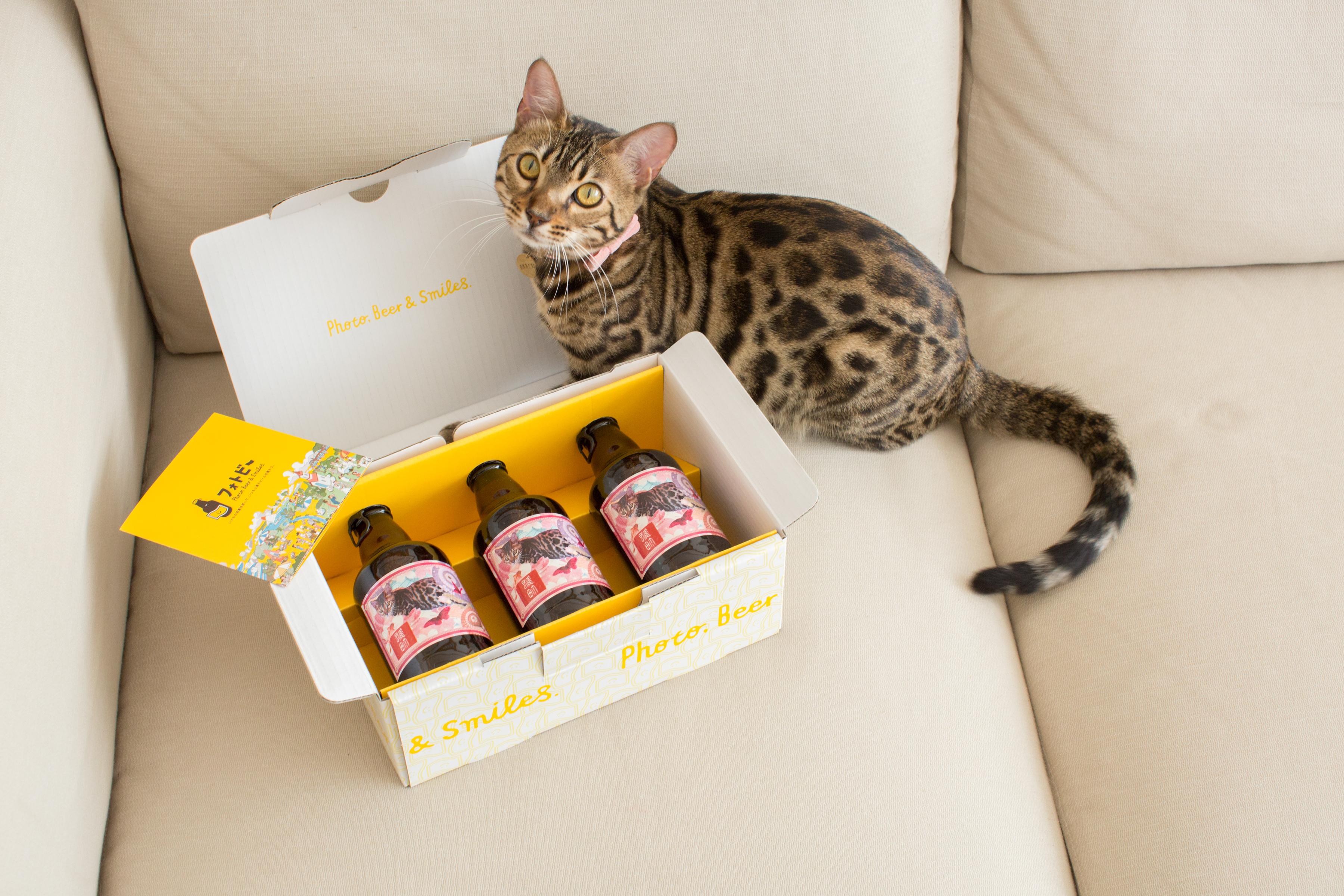 猫ちゃんもワンちゃんも大集合!「#うちの子フォトビー届いた」 インスタグラム投稿キャンペーン開催!