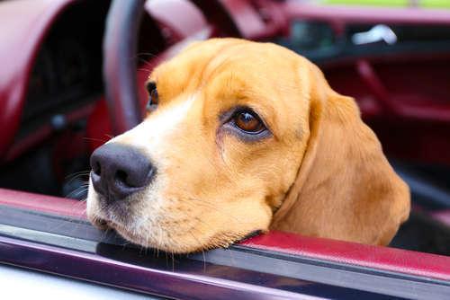 なかなか取り除けない車内の愛犬のニオイ。有効な対策はないの?