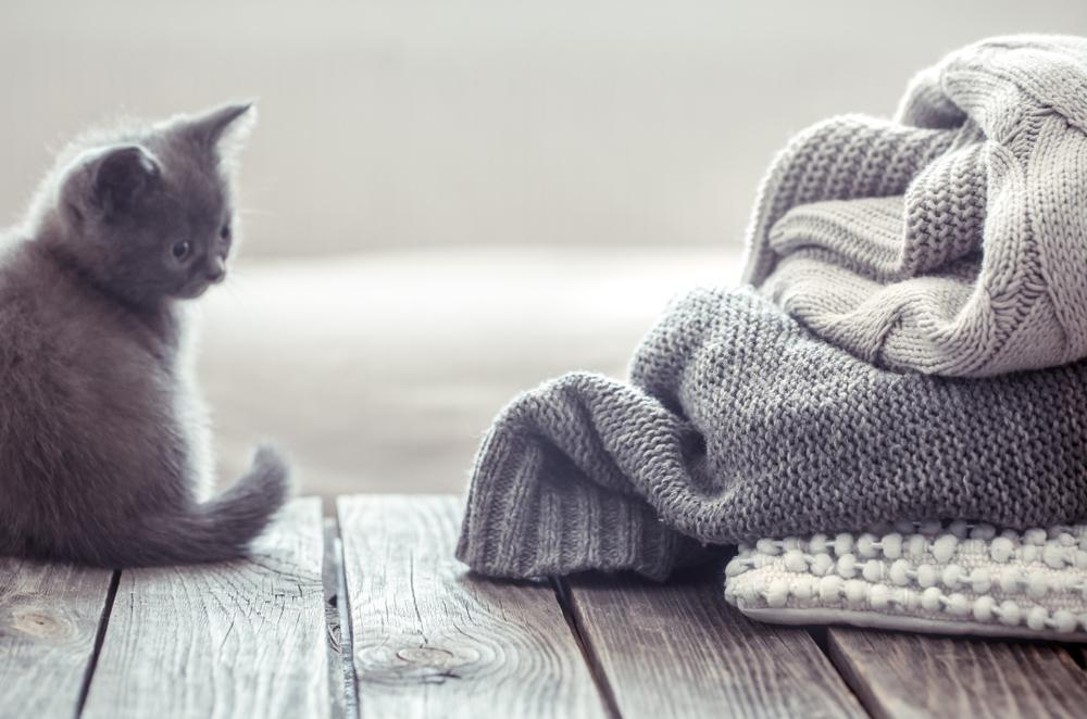 【見逃している?】可愛いけれど危険な猫ちゃんの行動