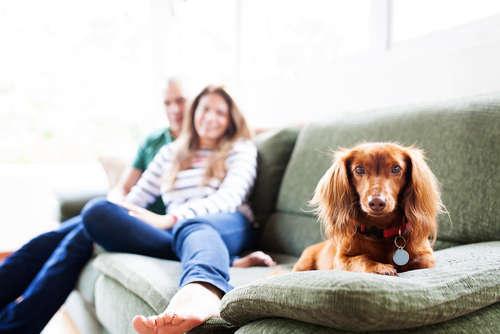 家族にとっては可愛い自慢のペット、でも来客時ニオイについて何か思われていないか心配…