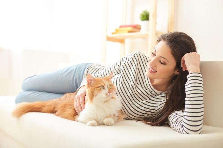 愛猫と暮らす快適な空間づくり! 抜け毛対策と効率的な清掃方法