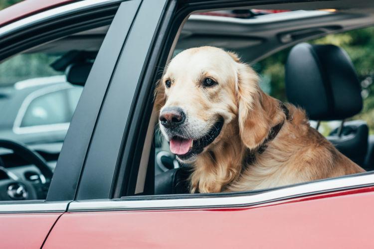愛犬とは家でも車でもずっと一緒の生活。犬のニオイがついた中古車はNGなの?