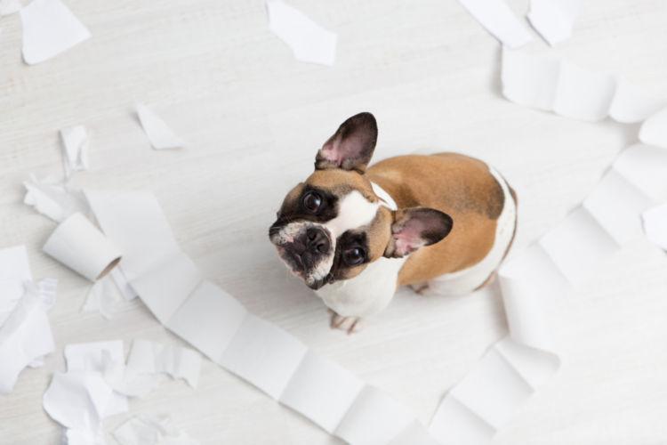 犬の粗相を治すコツは、「成功体験」にあるって知っていた?