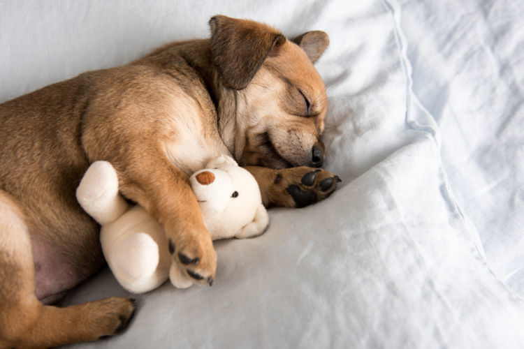 日中誰もいない家・・・犬が室内で快適に過ごせる方法とは