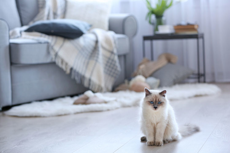猫と暮らす部屋はフローリングOK?快適に暮らすための床対策