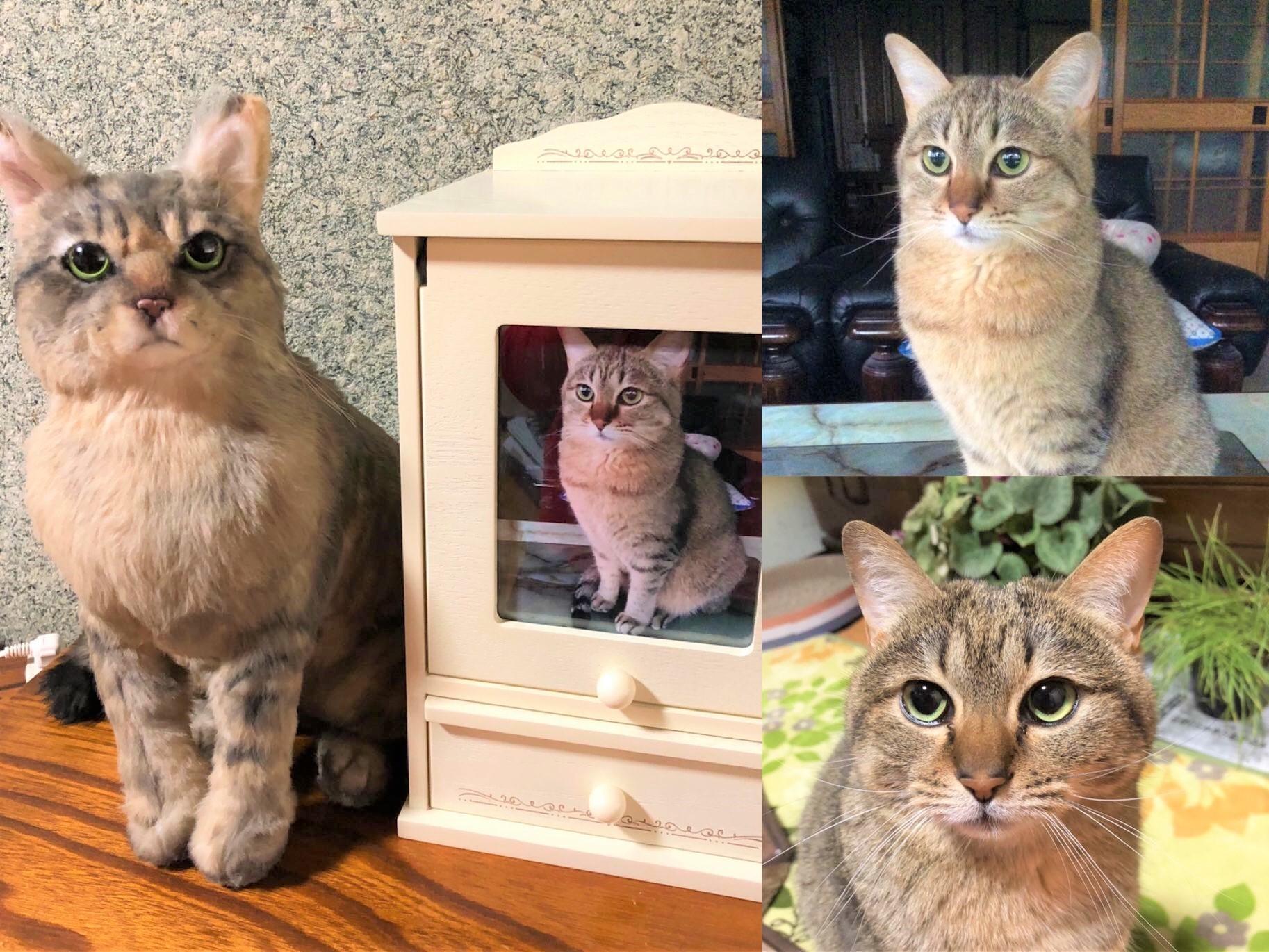 小さな猫が残してくれた、大きな愛のストーリー。