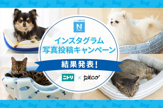【結果発表!!】「Nクールペットベッド」インスタグラム写真投稿キャンペーン