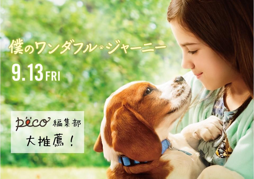 ペット映画は悲しい?これは「感動した」だけの映画じゃない。