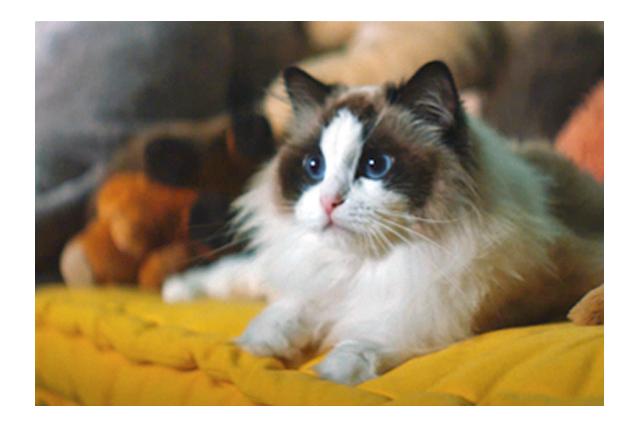 猫好き必見!YKK APのCM【窓と猫の物語】シリーズに新作が登場♡