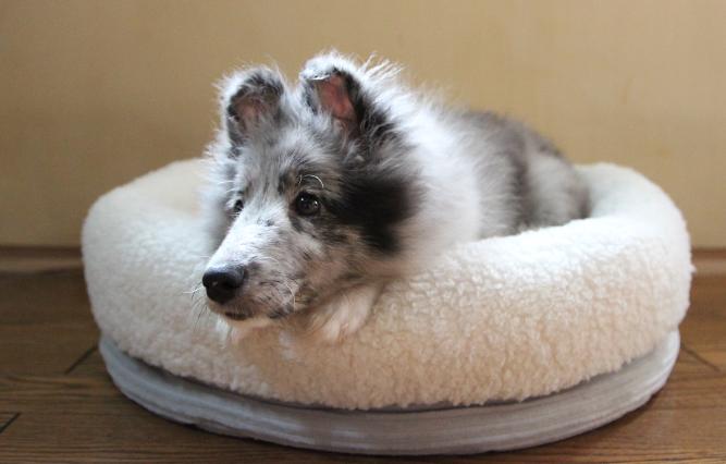 眠る姿は飼い主さんの癒し♡ペットを暖かく包むふわふわなペットベッドが今話題!