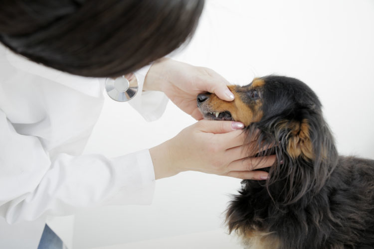 犬の歯磨き、動物病院での歯石除去も効果あり!