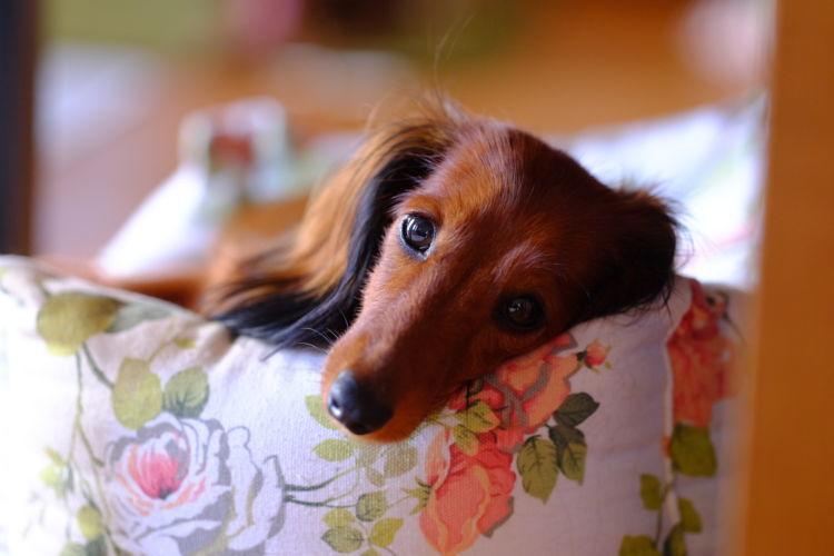 【獣医師監修】犬の「血便」はストレスが原因?激しい嘔吐や下痢、粘液の血便には要注意!