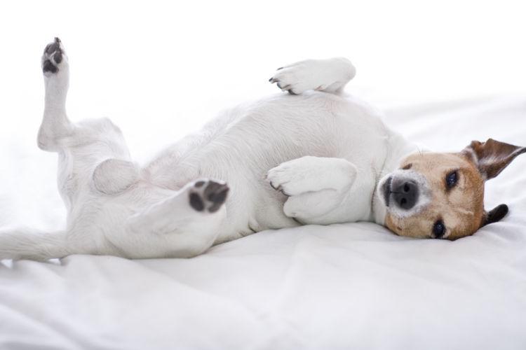 犬が空腹時に黄色い液体を吐く場合の対処法!