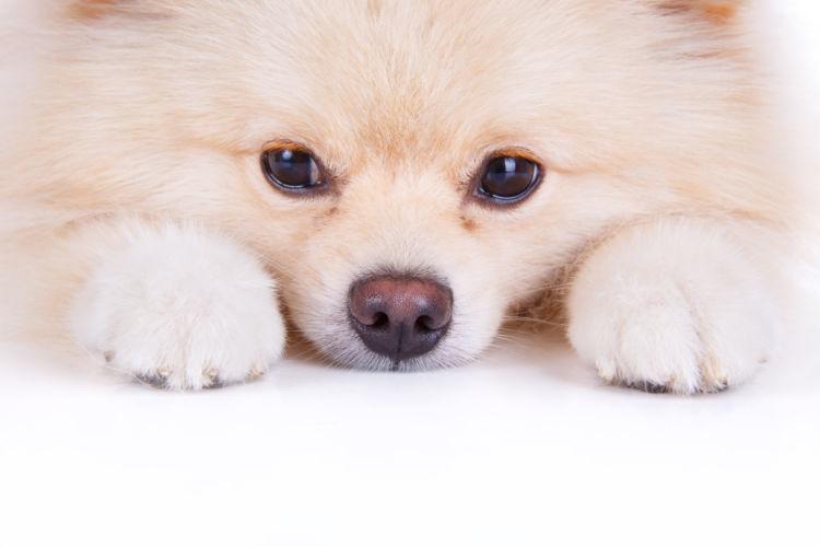 犬も人間等同様にストレスで嘔吐する?