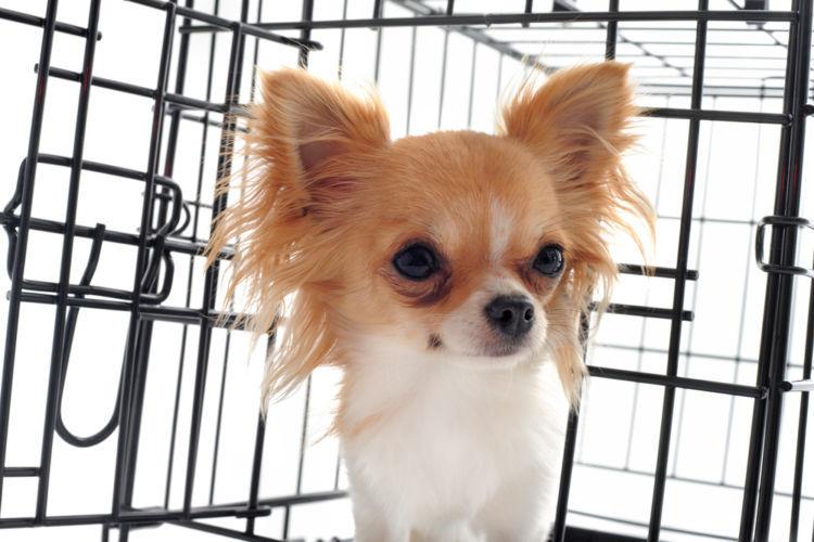 犬のケージ飼いの「メリット・デメリット」&ストレスを溜めないポイントとは?