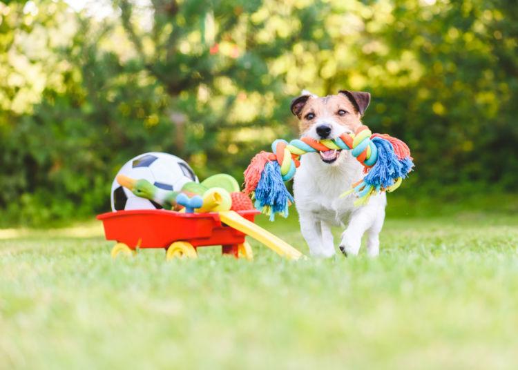 犬とおもちゃを使って遊ぶときのポイント