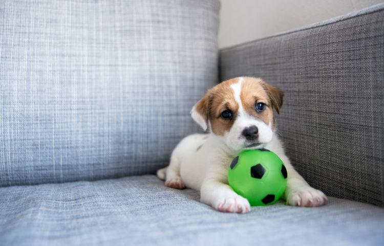 犬にとっての「おもちゃ」とは