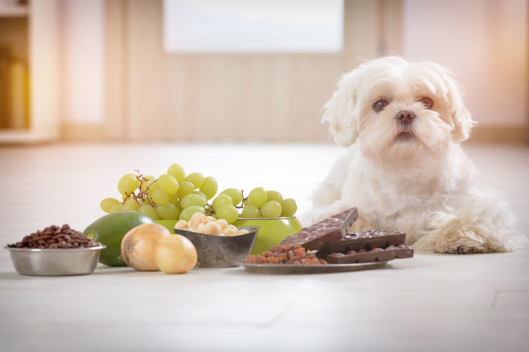 犬の血尿の原因となる病気(3)「急性腎不全」