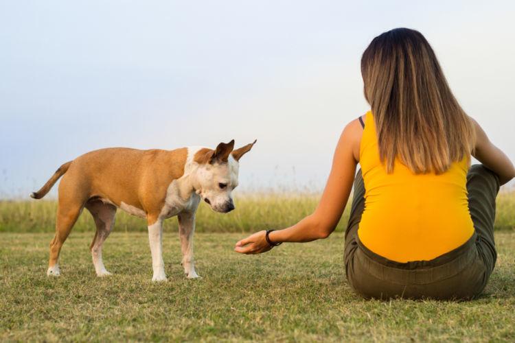 犬の血尿を予防するには?「ストレス・食事」