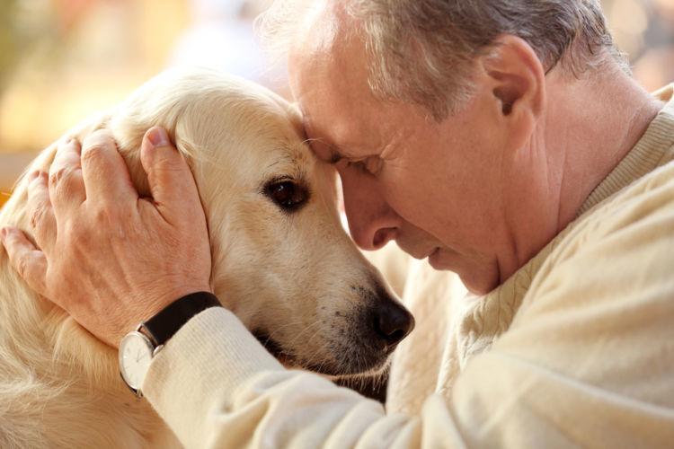 【獣医師監修】犬の平均寿命は何歳? 健康で長生きしてもらうには
