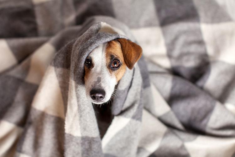 「犬の生理」と「ヒトの生理」は別もの!メカニズムを知ろう